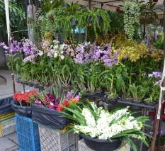 just your run of the mill orchid stall at the market