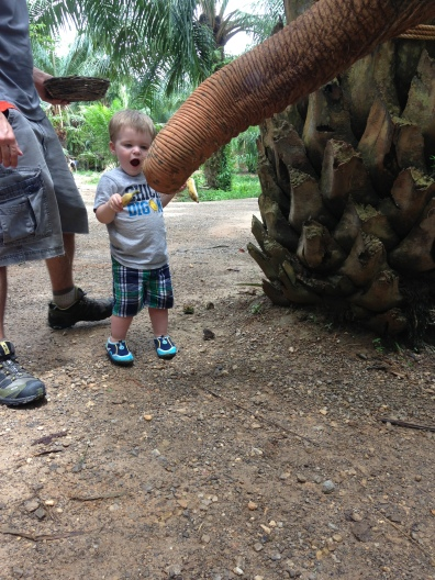 after he gave the elephant a banana killi would squeal with excitement