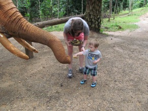 right before this the elephant swung this trunk and knocked killi over