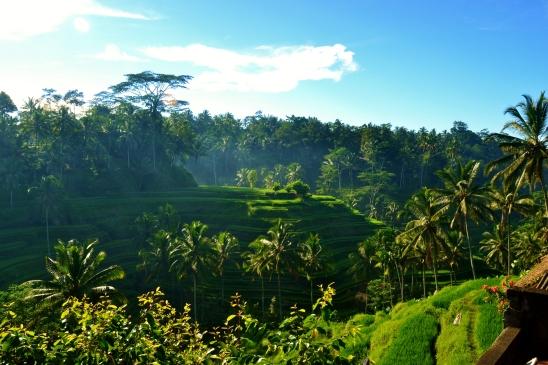 Telalalang Rice Terrace